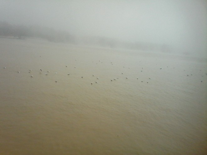 gulls6